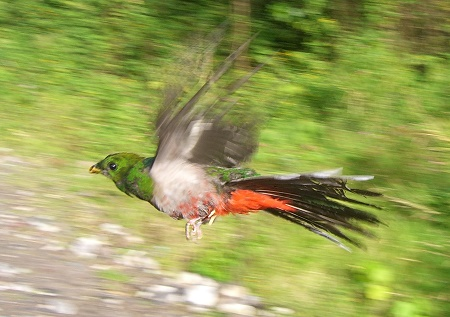 quetzal Jason Cohen 450