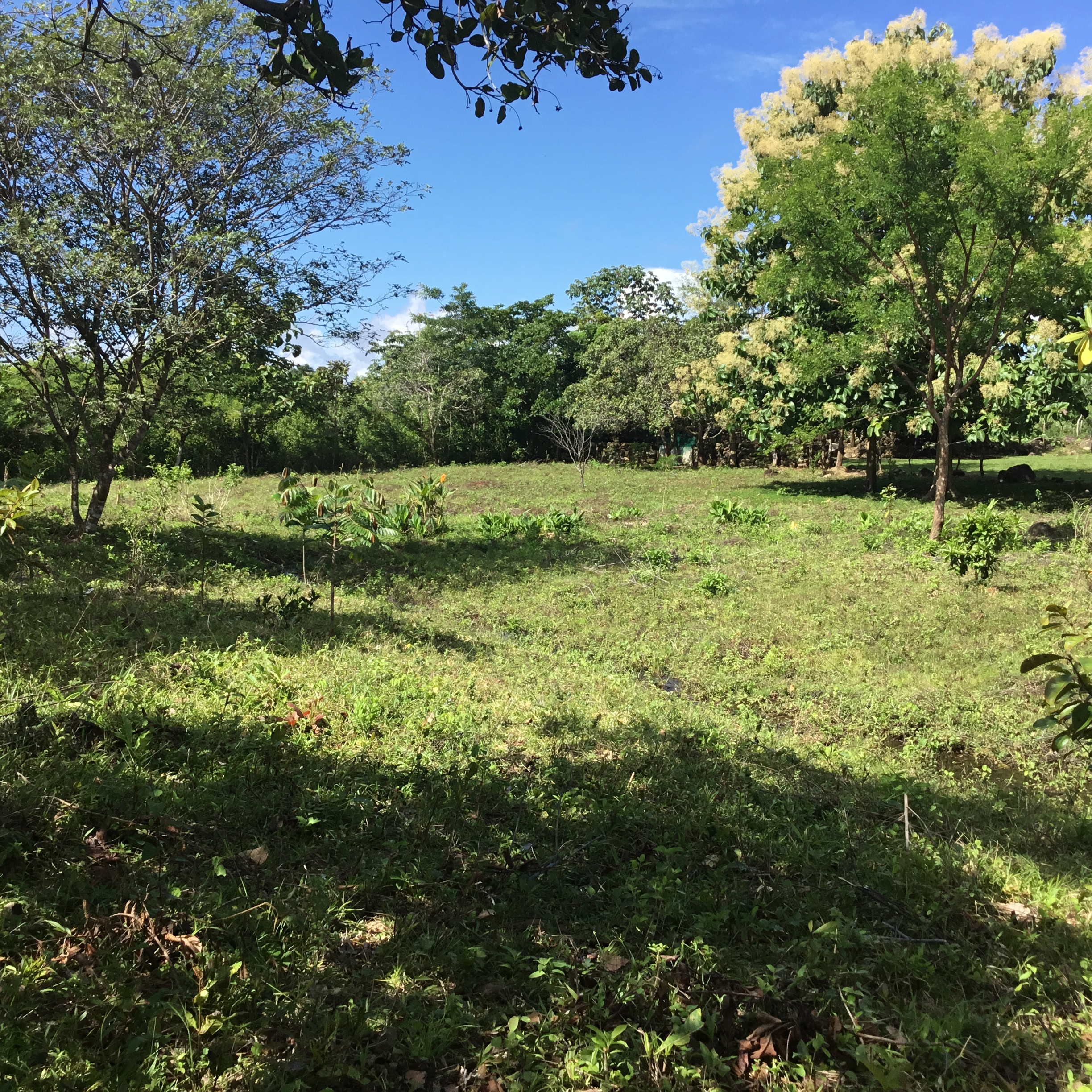 For Sale Archives Boquete Panama Real Estate Property Houses  # Muebles Sirena Animal Crossing