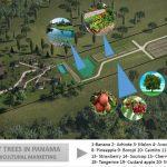 Organic Farm / Orchard Potential